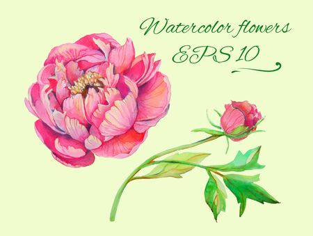 peony: set of isolated floral elements of blossom of peony and branch with leaves 1 Illustration