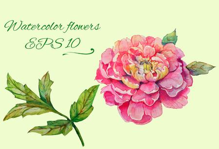 葉 2 と支店と牡丹の花の分離花要素のセット  イラスト・ベクター素材