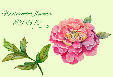 set of isolated floral elements of blossom of peony and branch with leaves 2