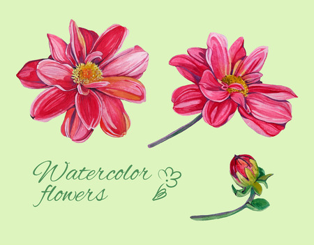 dahlia: set of isolated floral elements of blossom of dahlia with laeves 2 Illustration