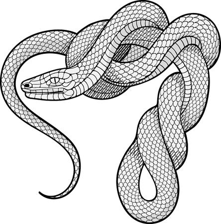 rope folk: black and white image of twisted snake. Decorative element