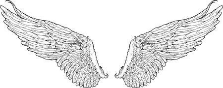 black wings: black and white isolated wings graphic style Illustration