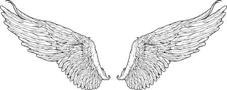 In bianco e nero le ali isolate stile grafico Archivio Fotografico - 52256638