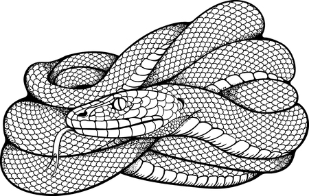 black and white image of coiled snake