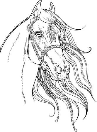 caballos negros: Retrato de un caballo decorado con elementos florales. Vectores
