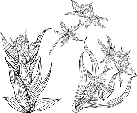 Sin Patrón De Flores De Iris. Dibujo Para Colorear. Ilustraciones ...