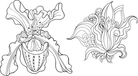 coloring sheets: Two isolated black and white flowers. Coloring page.