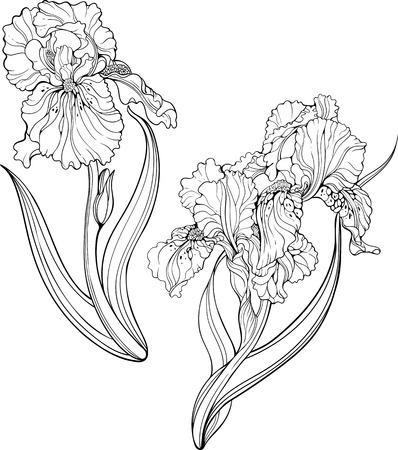 Twee geïsoleerde zwarte en witte iris bloemen. Kleurplaat.