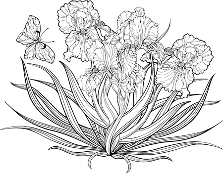Image of a bunch of iris flowers and a butterfly. Coloring page. Иллюстрация