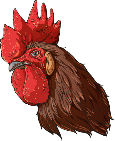 Isolated colorful image of rooster's head with  brown feathers.