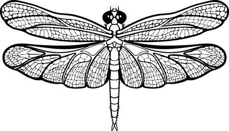 Isolated images of a dragonfly on white background. Vectores