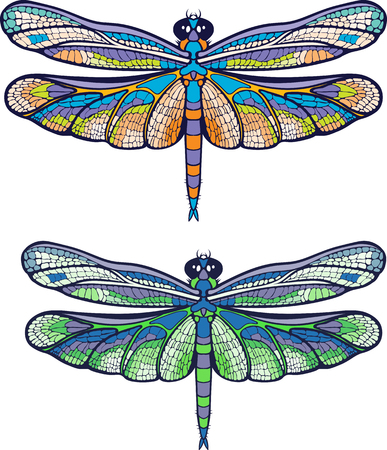 Colorful dragonfly illustration on white background.