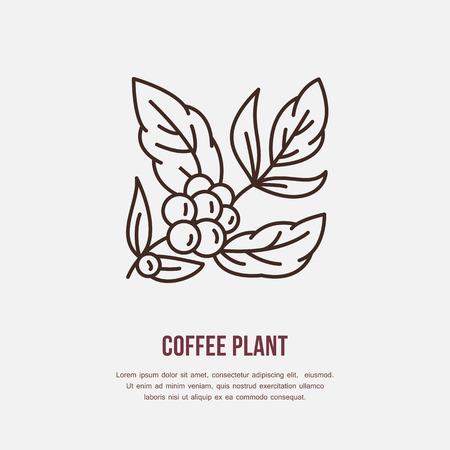 planta de cafe: Vector icono de la línea de la planta de café. planta de café logotipo lineal. símbolo del esquema de cafetería, bar, tienda. Coffeemaking elemento de diseño de sitios.