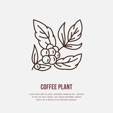 Vector line icon of coffee tree. Coffee plant linear logo. Outline symbol for cafe, bar, shop. Coffeemaking design element for sites. Ilustração