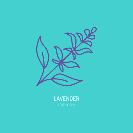 line icon of lavender bunch. Herbal essential oils sign, floral aroma.