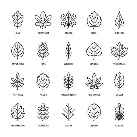 Iconos de línea plana de hojas de otoño. Tipos de hojas, serbal, abedul, arce, castaño, roble, pino cedro, tilo, rosa guelder. Signos finos de plantas de la naturaleza Trazos editables