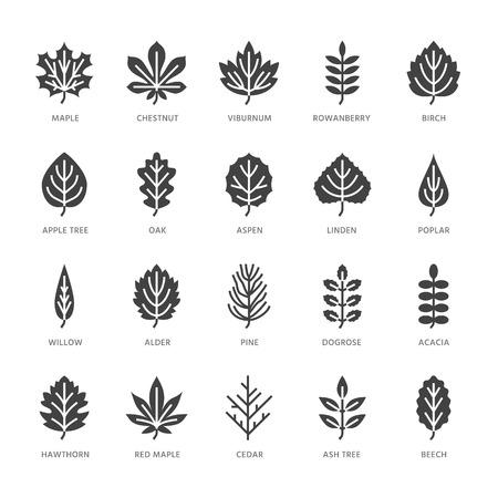 Hojas de otoño iconos de glifos planos. Tipos de hojas, serbal, abedul, arce, castaño, roble, pino cedro, tilo, rosa guelder. Signos de plantas de la naturaleza Pixel de silueta sólida perfecta 64x64.