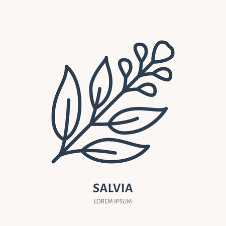 Salvia, sage flat line icon. Medicinal plant leaves vector illustration. Thin sign for herbal medicine, tree branch logo.
