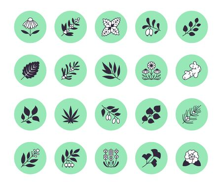 Medical herbs flat line icons. Medicinal plants echinacea, melissa, eucalyptus, goji berry, basil, ginger root, thyme, chamomile. Silhouette signs for herbal medicine. Illustration