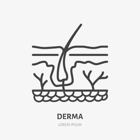 Skin layer flat line icon. Vector thin pictogram of human epidermis, outline illustration for dermatology clinic. Illustration