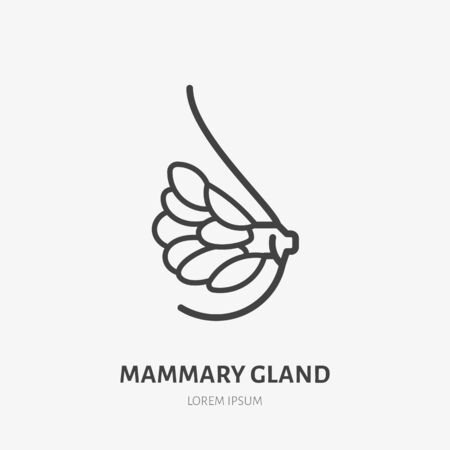 Mammary gland flat line icon. Vector thin pictogram of female breast anatomy, outline illustration for medical clinic. Illustration