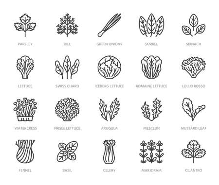 Green vegetables flat line icons set. Lettuce, spinach, cress salad, chard, dill, celery vector illustrations. Outline pictogram for fresh food vegan store. Pixel perfect 64x64. Editable Strokes.