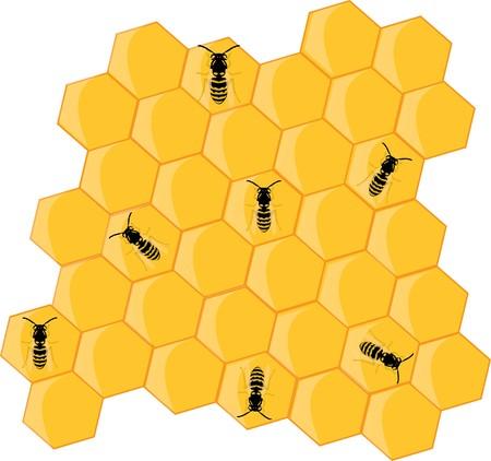 miel et abeilles: abeilles mellif�res et ruche