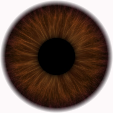 big eye: brown eye in a closeup isolated on a white background Stock Photo