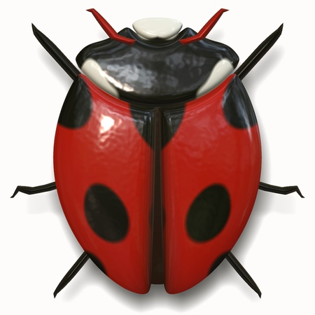 ladybird is the beautiful bug of nature photo