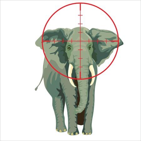 poacher: elephant target of poachers in africa