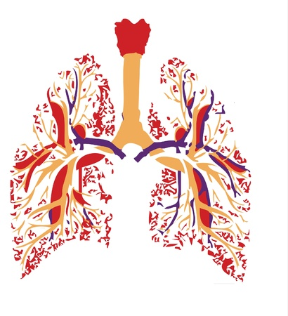 lungs in the body Vector