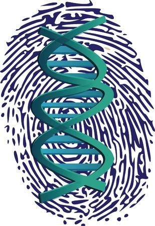empreinte du pouce: ADN sur thumbprint
