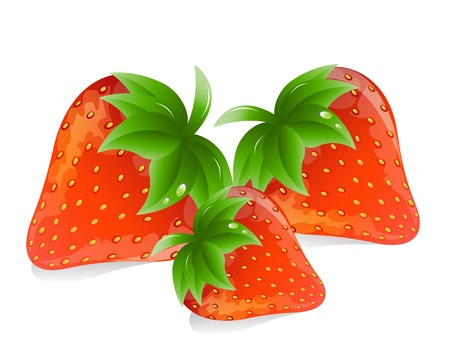 Vector Illustration: strawberries Stock Vector - 13963106