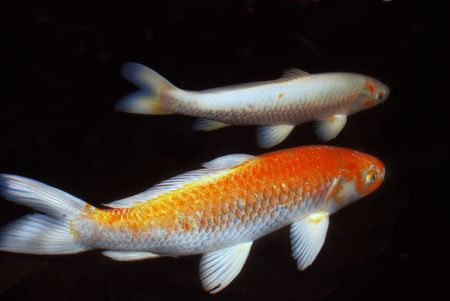Two fish Stock Photo - 3420961