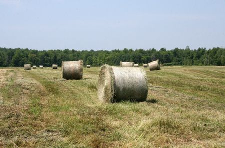 Rolled bales of Hay on a Farm  Stock Photo