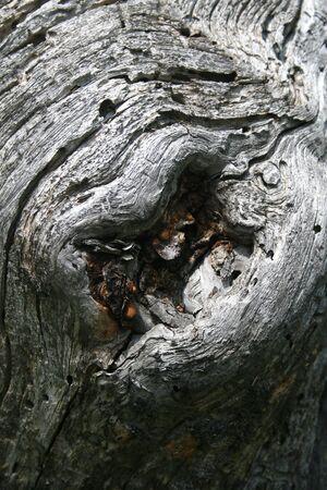 Lips on a tree