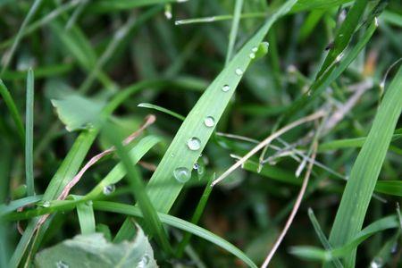 Dew Macro on Grass