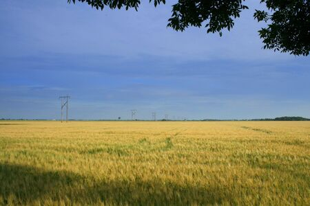Scenic view of field and sky
