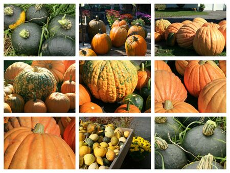 Collage of buttercup, pumpkin, and autumn squashes Stock Photo
