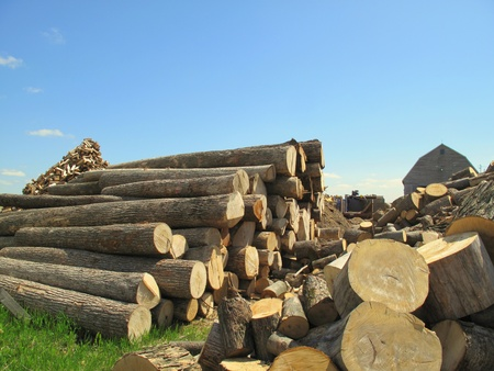 Wood tree trunks stack and ready to be cut