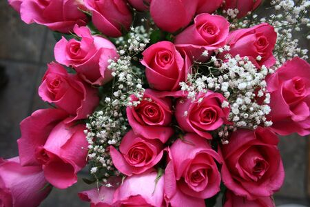 Pink roses with baby s breath Stock Photo - 13504704