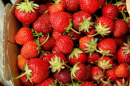 Red juicy strawberries in a basket photo