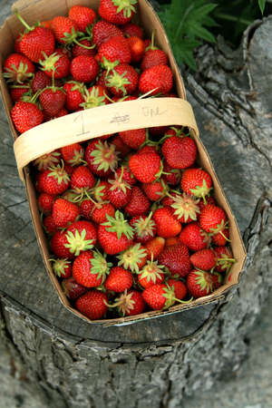 Red juicy strawberries in a basket with a handle