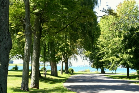 Scenic road with majestic trees on a street with lake in background