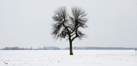 Lone tree on a large tract of land in winter snow photo