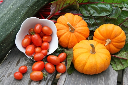 Harvest of miniature pumpkins, chard, zucchini and cherry tomatoes in bowl
