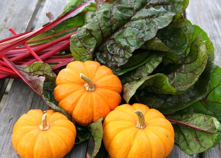 Harvest of miniature decorative pumpkins and swiss chard Stock Photo