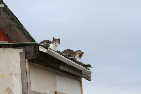 Two cats sitting on edge of a roof with sky as background Stock Photo