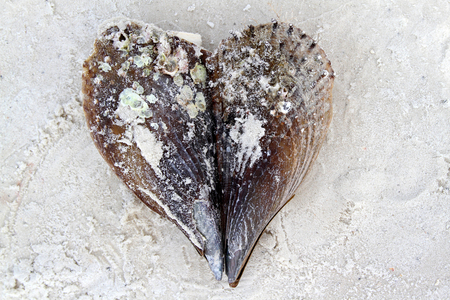 Valentine heart made of sea shells on sandy beach