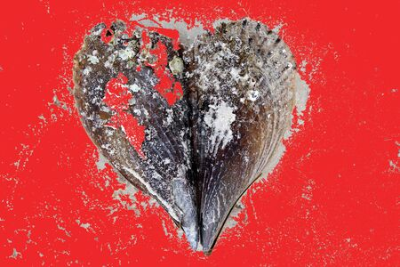 Artistic sea shell valentine heart with red background